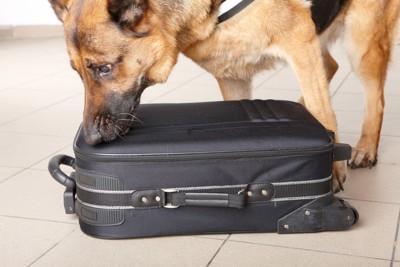 キャリーケースの匂いを嗅ぐ犬