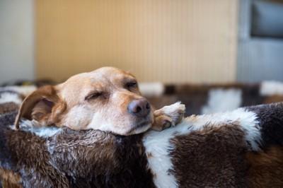 ベッドに顎を乗せて寝る犬