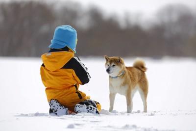柴犬と遊ぶ青い帽子の男の子