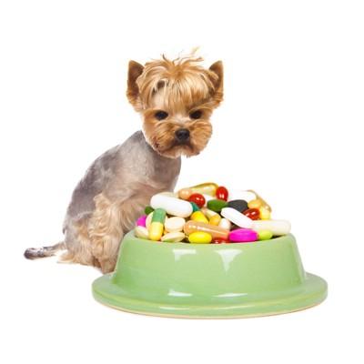 ドッグフード皿に乗った薬を見つめる犬