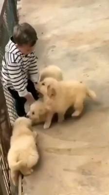 立つ男の子と子犬たち