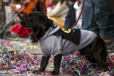 バッドマンの服を着た犬