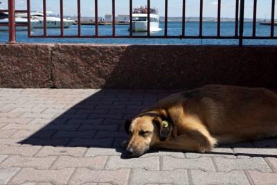 日陰でぐったりする犬