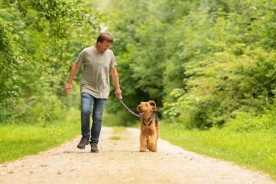 散歩中の男性とエアデールテリア