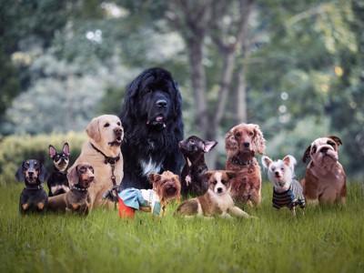 草むらに集まったいろいろな犬種の犬たち
