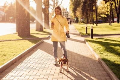スマホを見ながら散歩する女性とビーグル犬