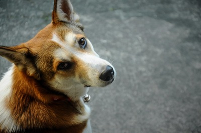 振り向いてこちらを見上げる犬