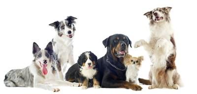 寄り添う様々な種類の6匹の犬
