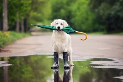 傘をくわえている犬