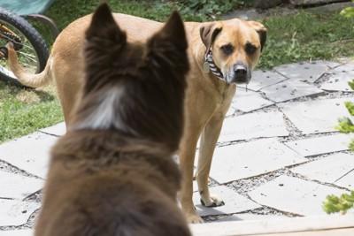 見つめ合う犬2匹
