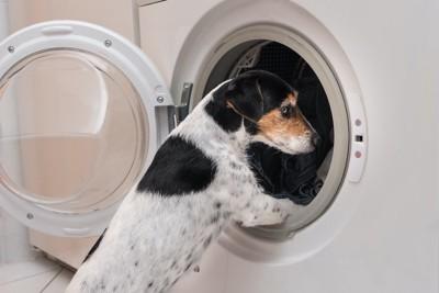 洗濯機に入ろうとする犬