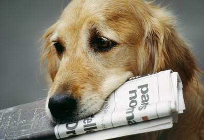 新聞紙を咥えた大型犬
