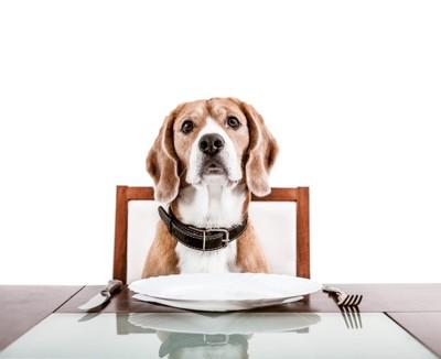 空の食器を前にする犬