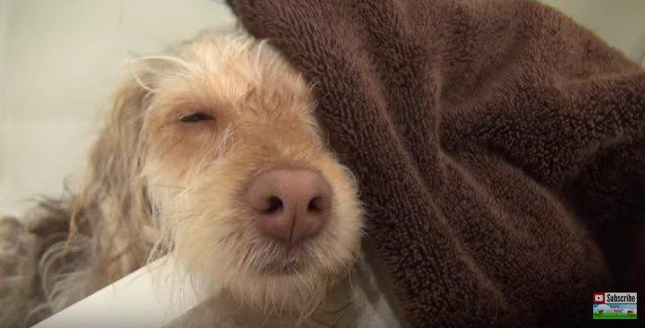 タオルドライする犬