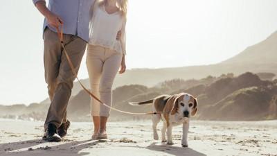 散歩するカップルと犬