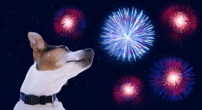 花火の音に驚いている犬