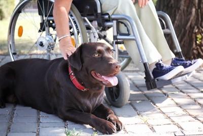 車椅子と犬
