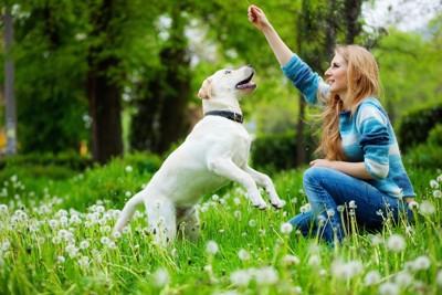 草原の中で遊ぶ犬と女性