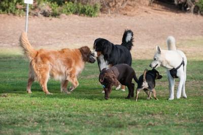 広場でたわむれる5頭の犬