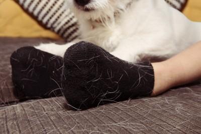 毛だらけの靴下を履いた足