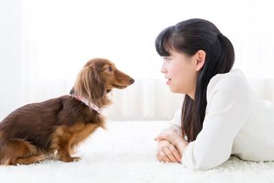 犬と向かい合って目を合わせる女性