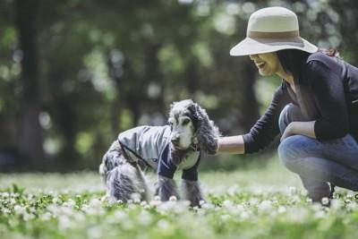 散歩する老犬と笑顔の飼い主