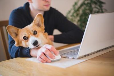 パソコンを使っている人とコーギー