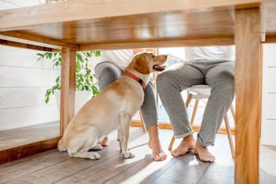 テーブルの下、足元で待機する犬