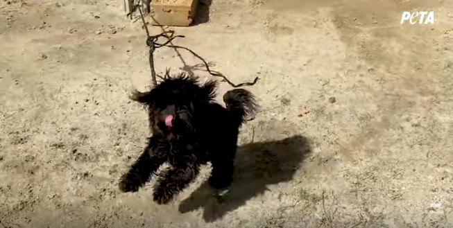 つながれて跳ねる犬