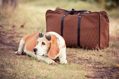 旅行鞄と犬
