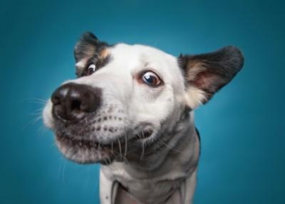 鼻をこちらに近づける犬