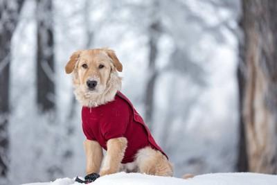 雪の中で座る赤い服を着た犬
