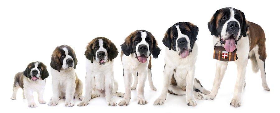 犬の成長過程
