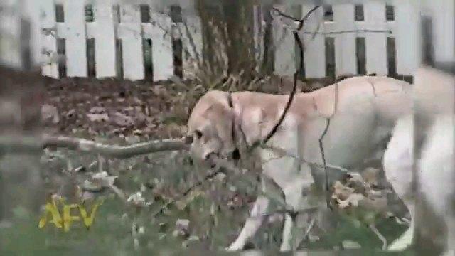 枝を咥える犬アップ
