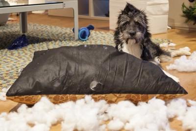 クッションを破壊する犬