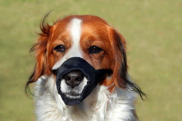 口輪をしている犬