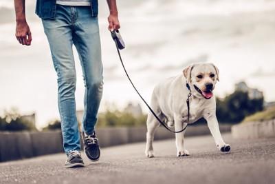 飼い主と散歩を楽しむ犬