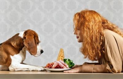 食べ物を見つめる犬と女性
