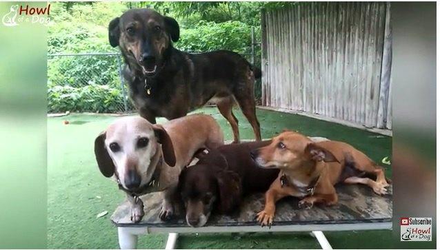 保護犬たち