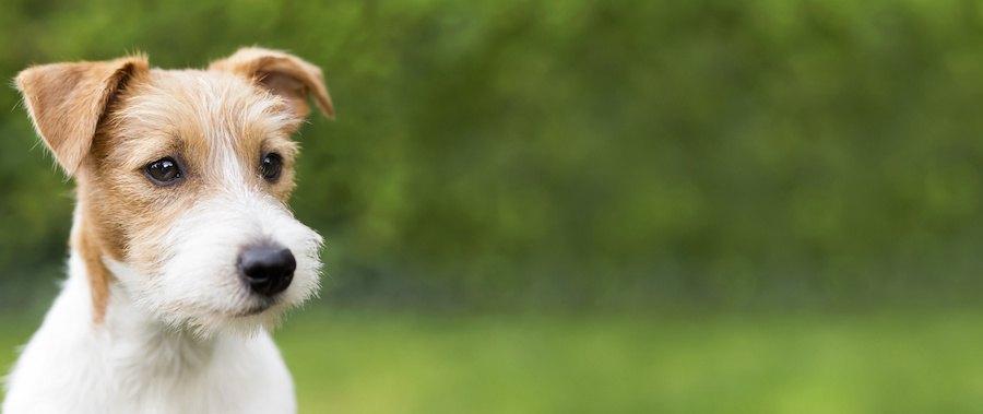 屋外で何かを見つめる犬