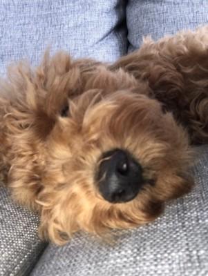 愛犬の寝顔写真14枚目