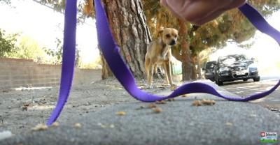 ひもを警戒する犬