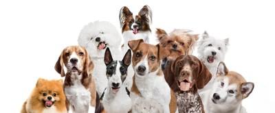 複数種の犬