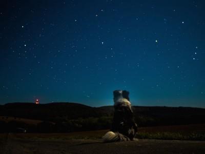 星空と犬の後ろ姿