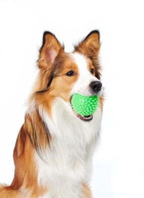 緑のボールをくわえて座る犬