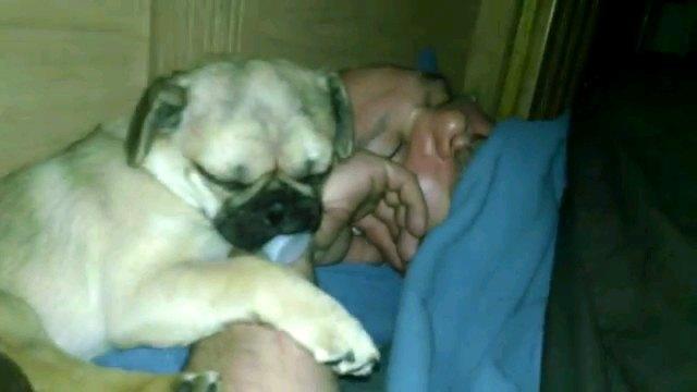 男性と寝る犬正面