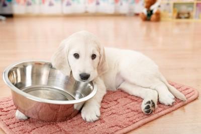 食器を抱える犬
