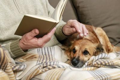 ソファーで読書するシニアの男性と犬