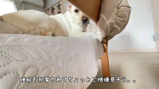 睡眠を~字幕