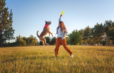 女性とフリスビーで遊んでいる犬